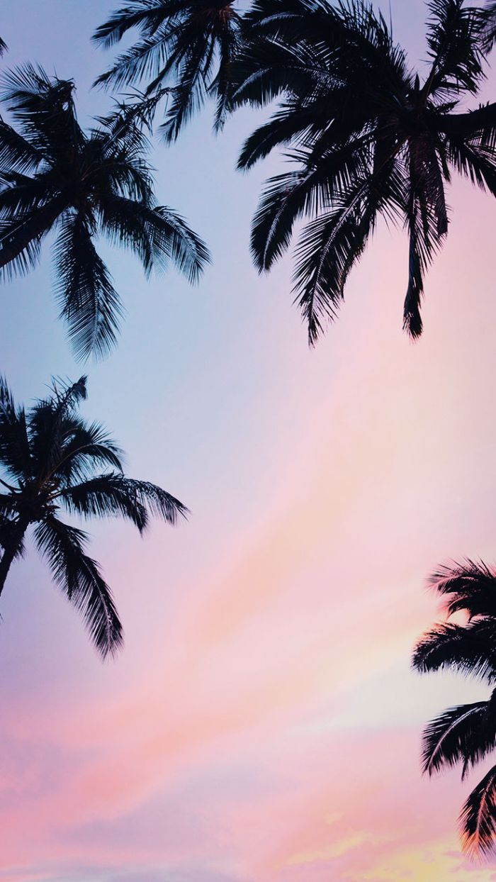 palm trees photographed from below at sunset summer iphone wallpaper