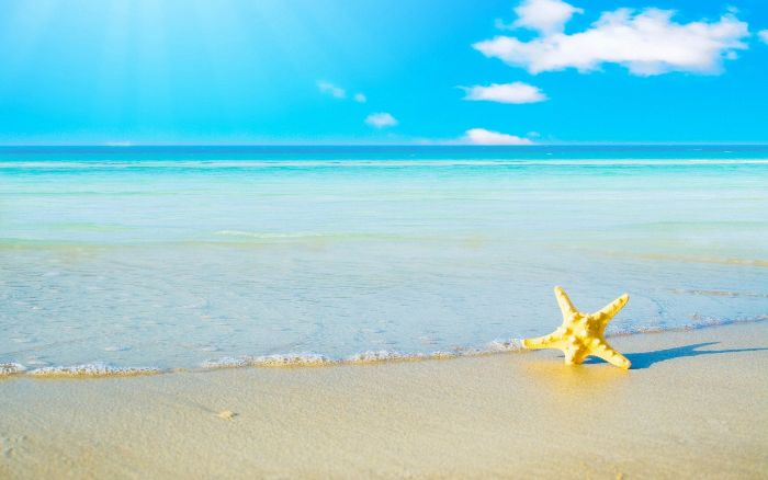 sea star in yellow stuck in the sand summer wallpaper ocean waves in the background