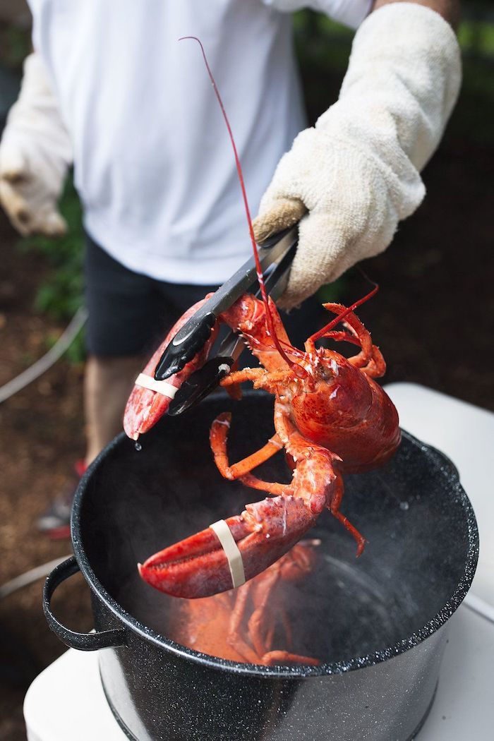 lobster being put into large pan filled with boiling water with the help of tongs how to boil shrimp