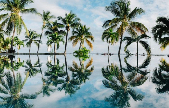 lots of palm trees in the water beach aesthetic wallpaper mirror reflection of them in the water
