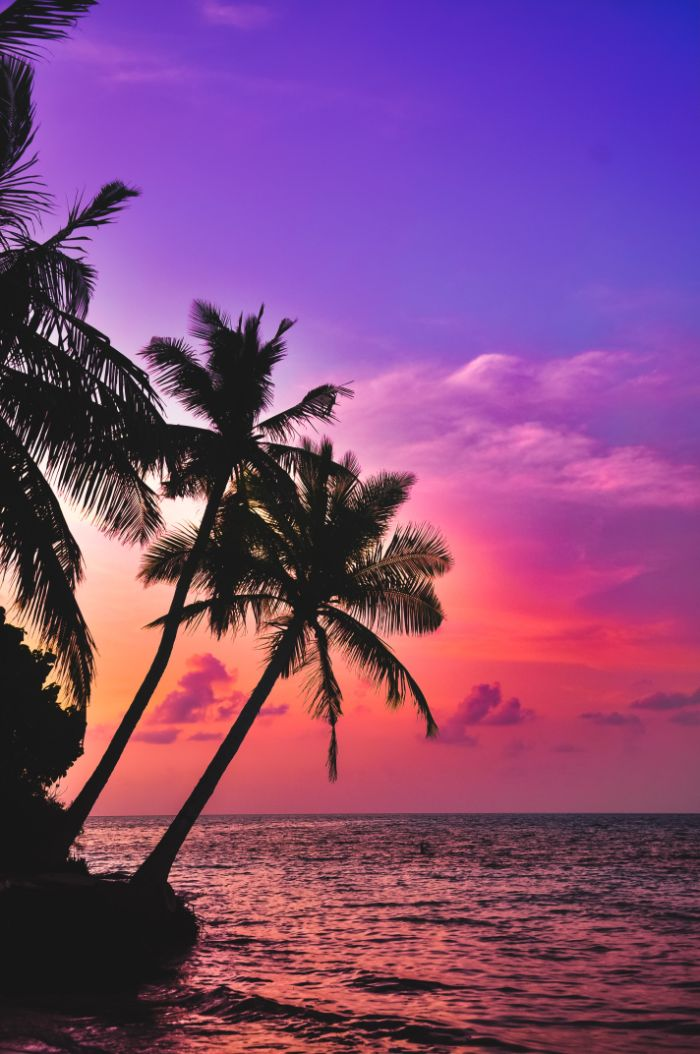 palm trees above the water summer aesthetic wallpaper phtoographed at sunset with sky in blue purple and orange