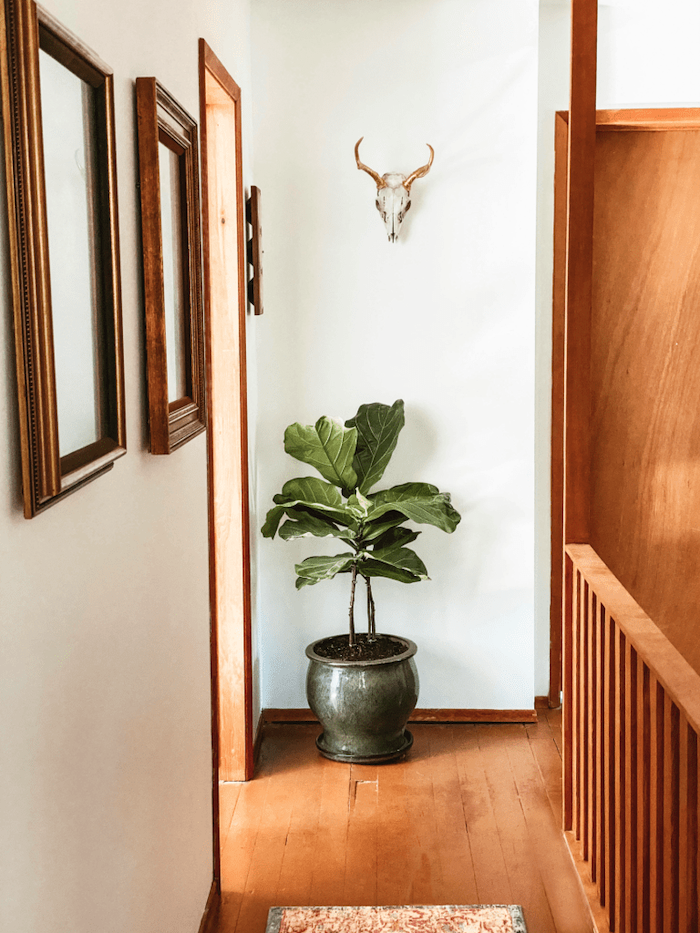 potted plant on wooden floor decorating ideas for stairs and hallways framed art with vintage frames hanging on white wall