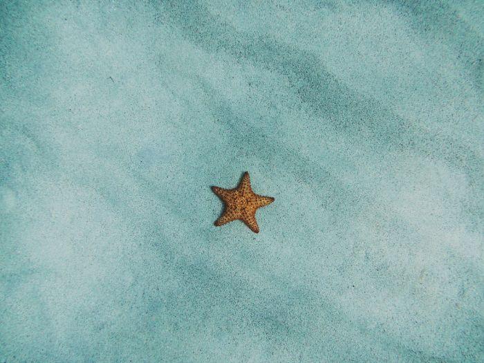 sea star on the sand beach aesthetic wallpaper bottom of the ocean photo