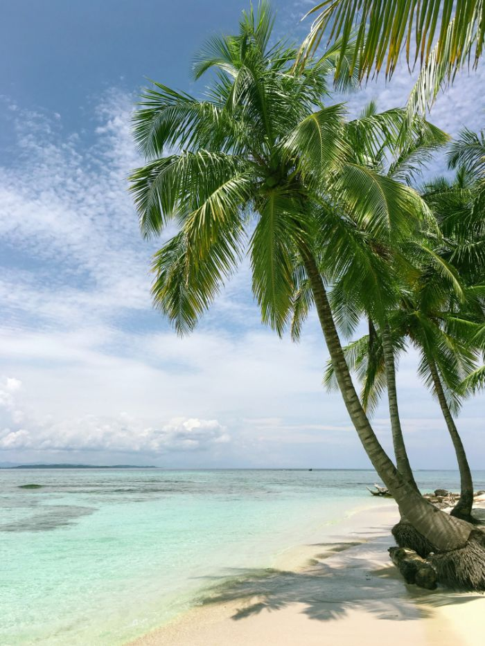 tall palm trees on the beach beach background iphone clear turquoise ocean water