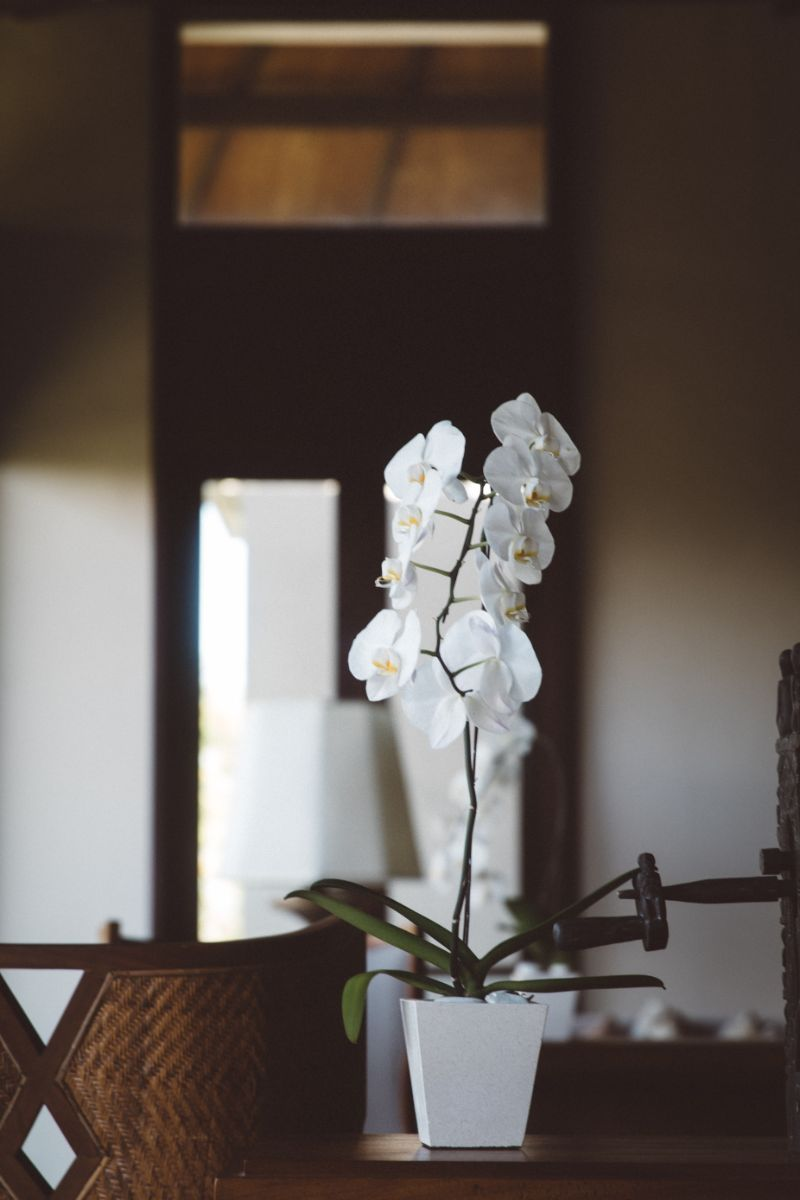 beautiful white orchid how to care for orchids indoors