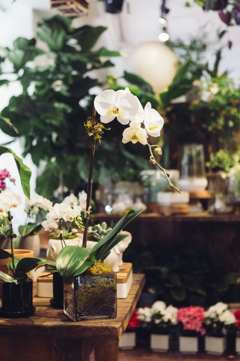 how long do orchids live pots with different orchids