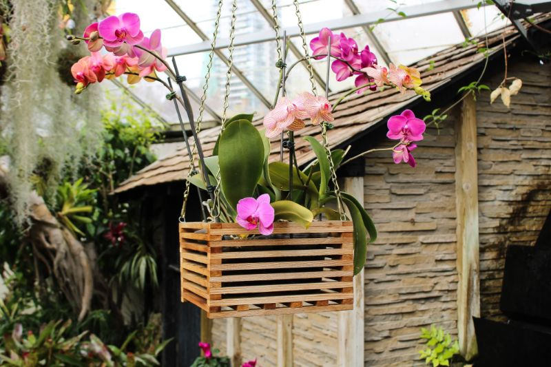 how to care for orchids purple orchid in crate