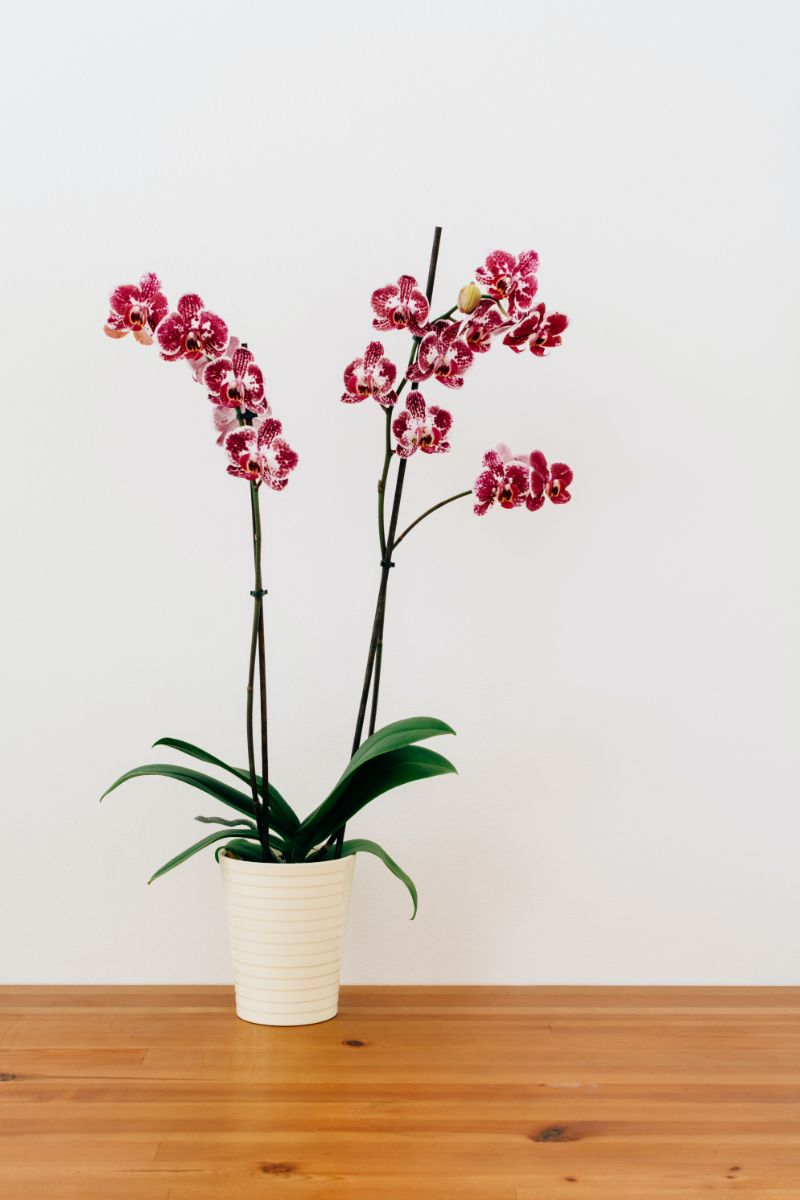 how to take care of orchids pink and white orchid