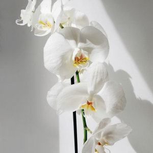 How to take care of orchids - the ultimate guide