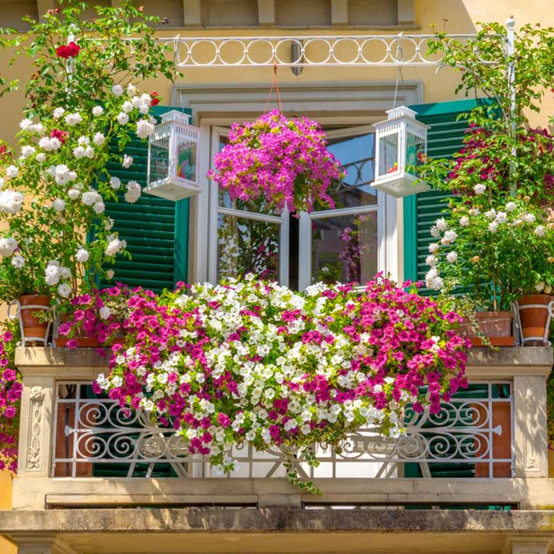 balcony covered with flowers low maintenance plants