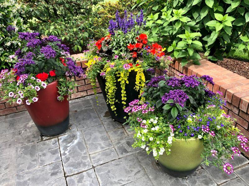 colorful plants in pots low maintenance outdoor plants