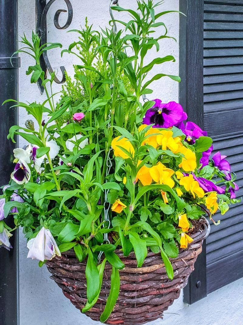 easy plants to grow hanging basket