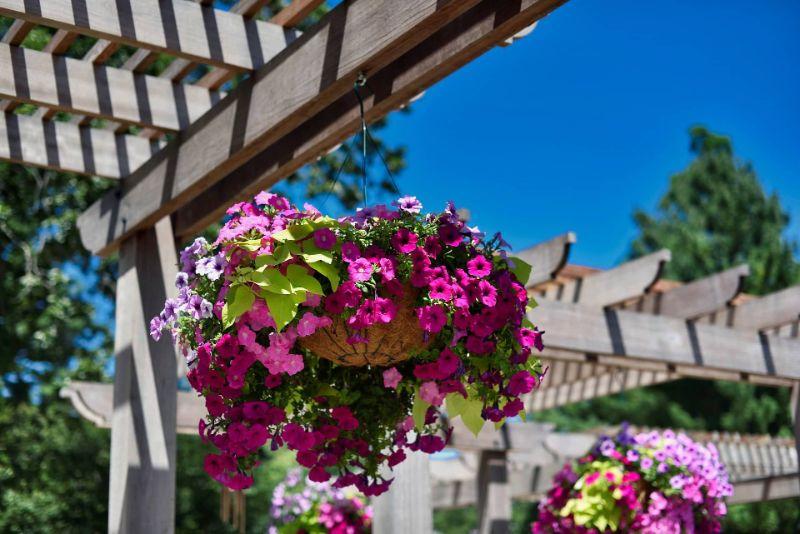 hanging flowers garden patio easy plants to grow