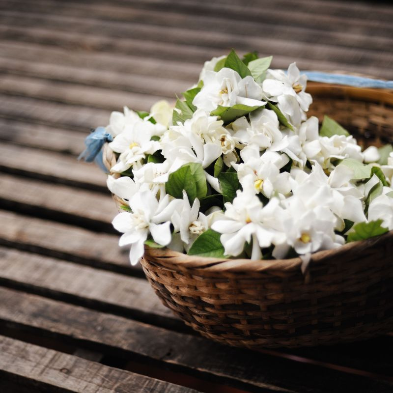 jasmine flower placed in basket on wooden table