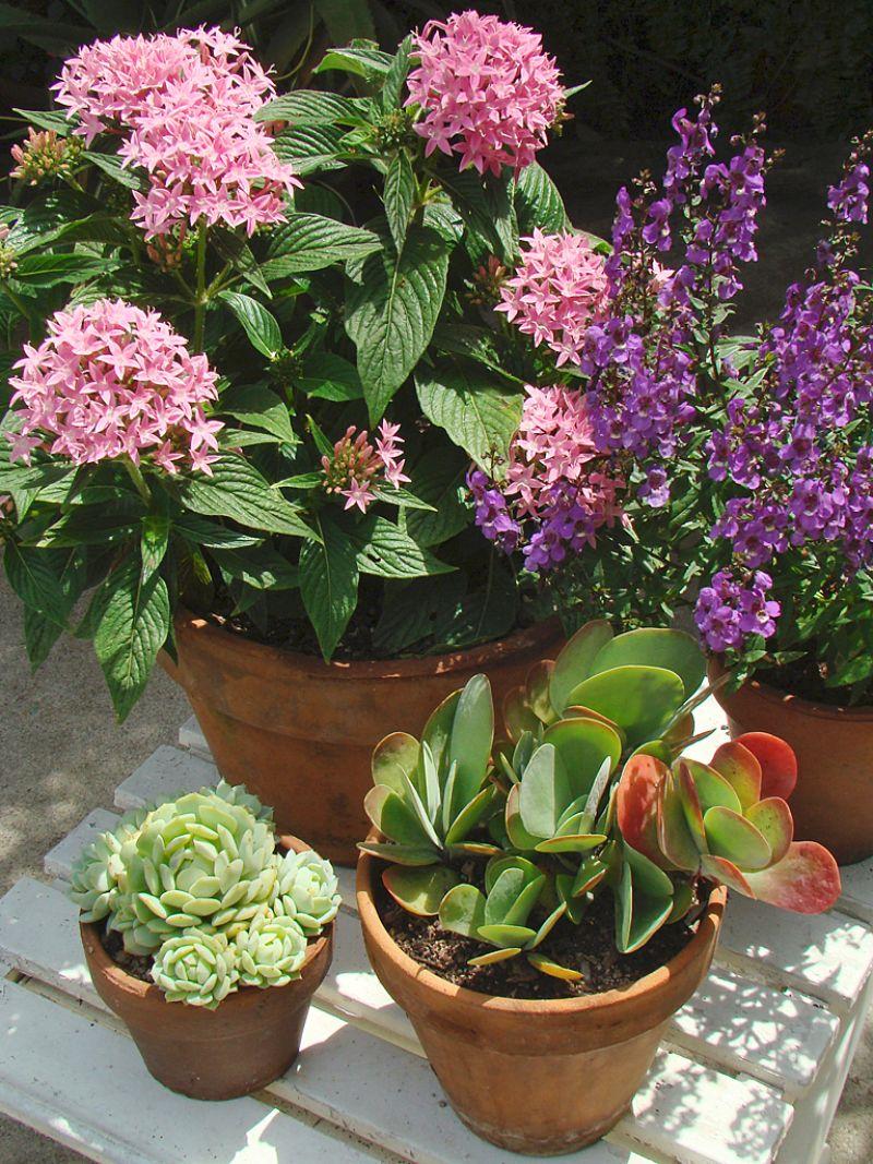 low maintenance plants four ceramic pots