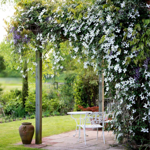 How to grow a beautiful jasmine flower to add to your exterior