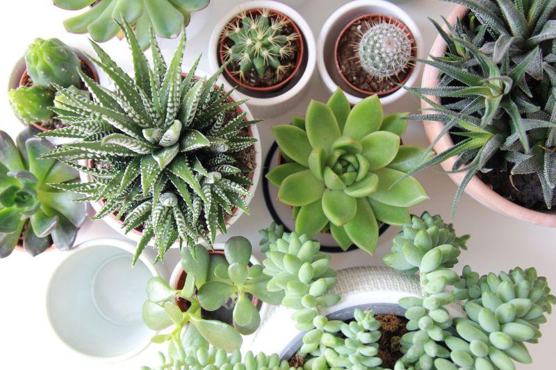 succulents low maintenance outdoor plants in pots