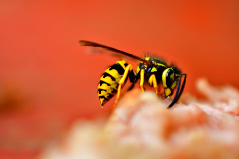 wasp how to get rid of aphids on flower