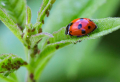 How to get rid of aphids – save your plants with a few homemade remedies