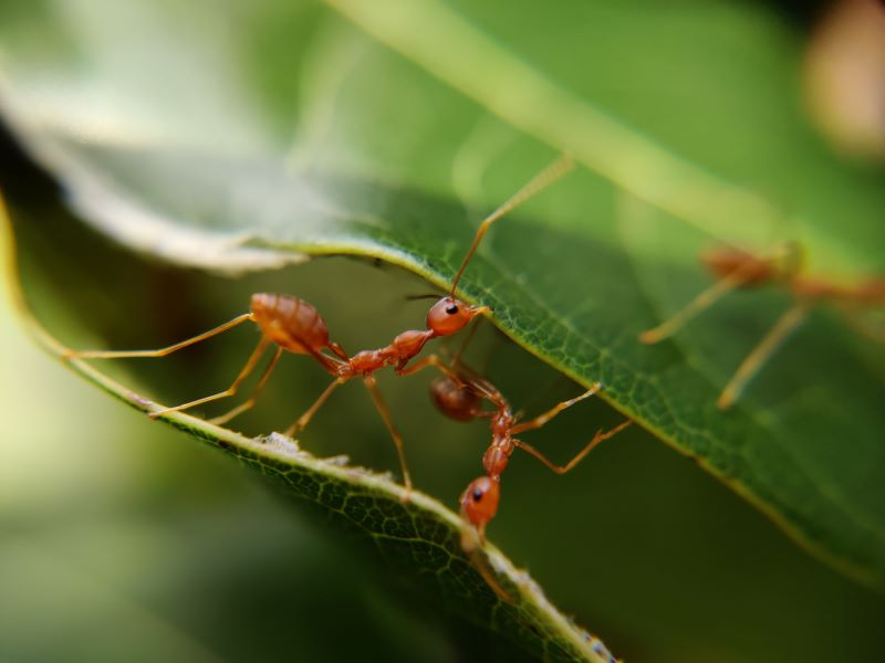 ants in house on green leaf close up photo