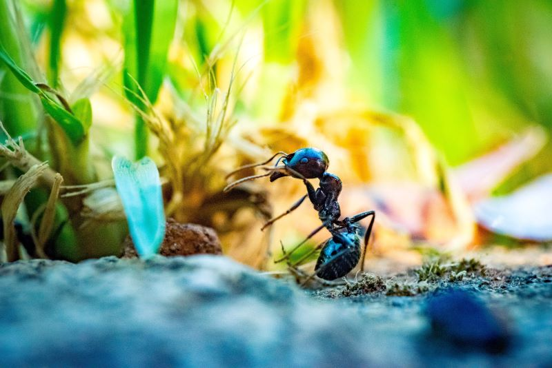 close up of how to kill ants next to plant