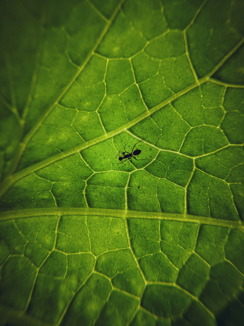 close up photo ants in house on leaf