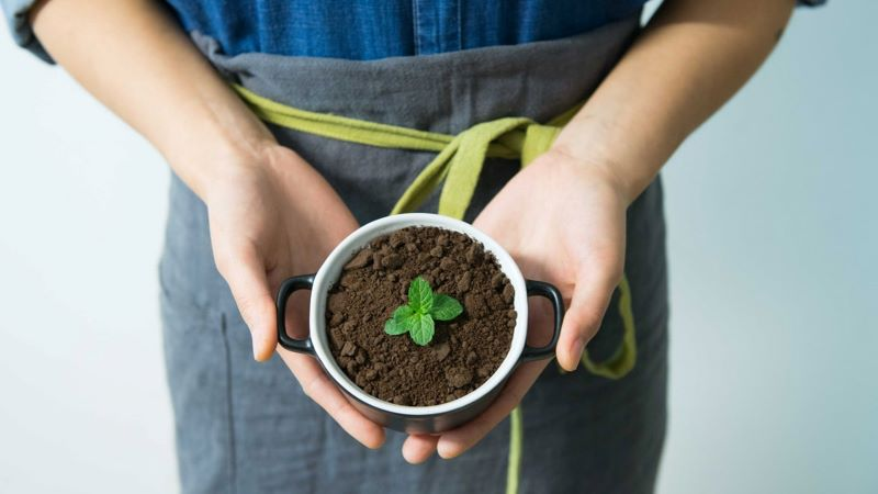 coffee grounds for plants inside mug