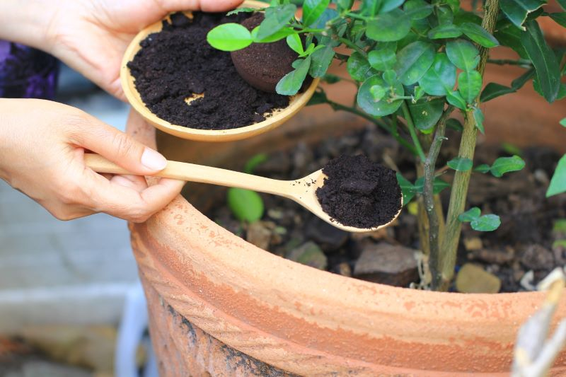 coffee grounds in garden placed in pot