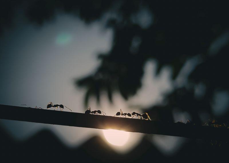 get rid of ants walking on tree branch