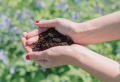 How to use coffee grounds for plants and around your garden