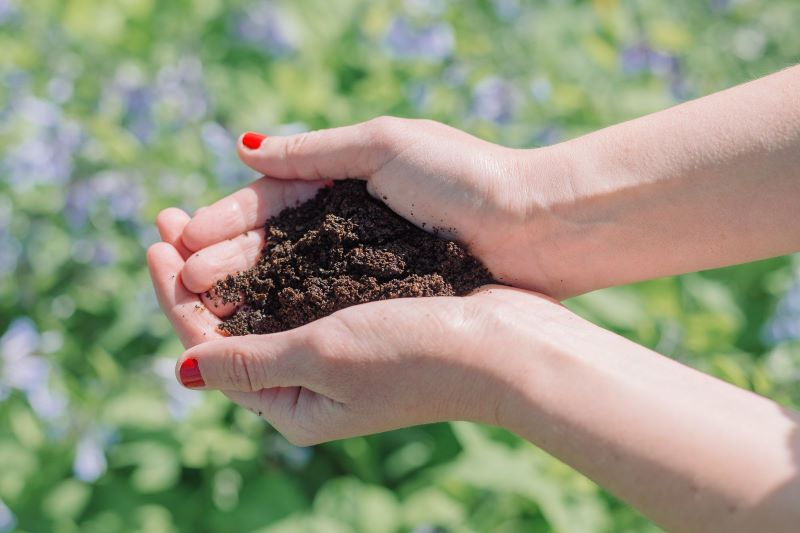 hands golding coffee grounds as fertilizer