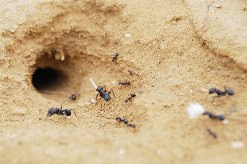 how to get rid of ants going to nest
