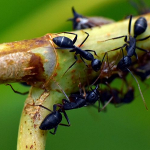 How to get rid of ants in our garden and our home