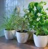 kitchen herb garden three planters