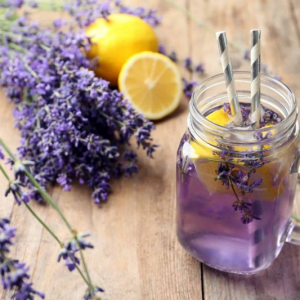 How to grow lavender plant - care guide