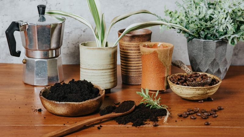potted plants coffee grounds in garden wooden table