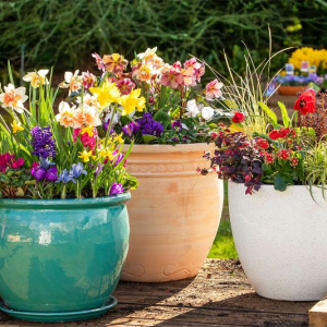 How to grow perennial flowers in pots for an always beautiful garden