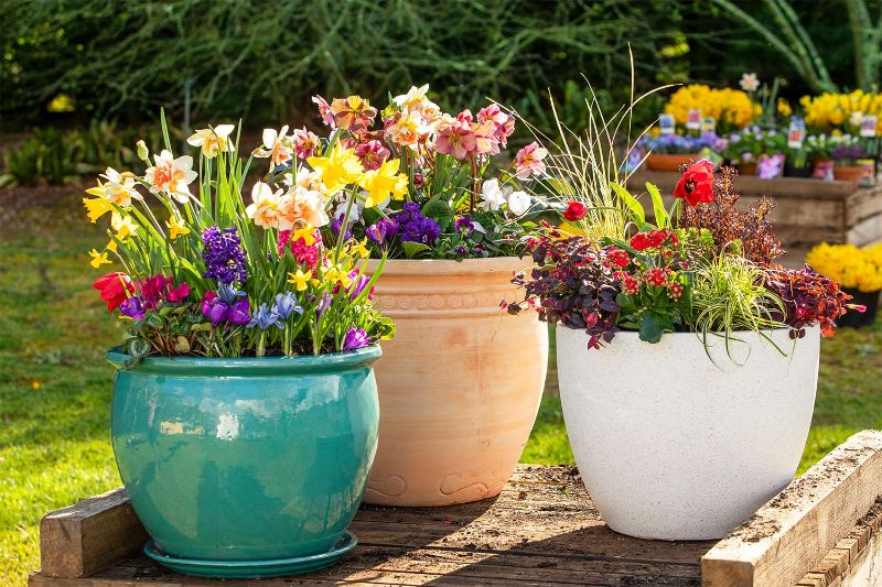 three pots with colorful perennial plants