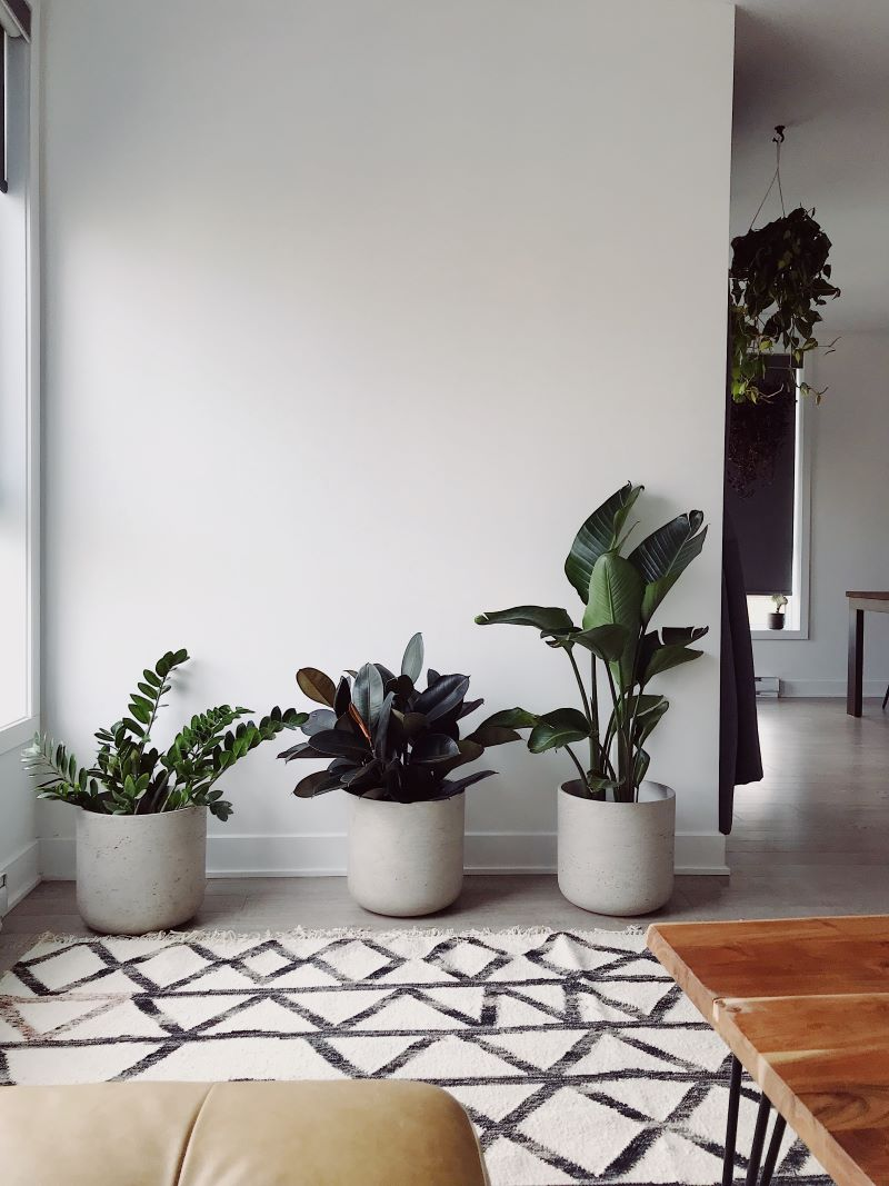 three potted plants redesigning your home