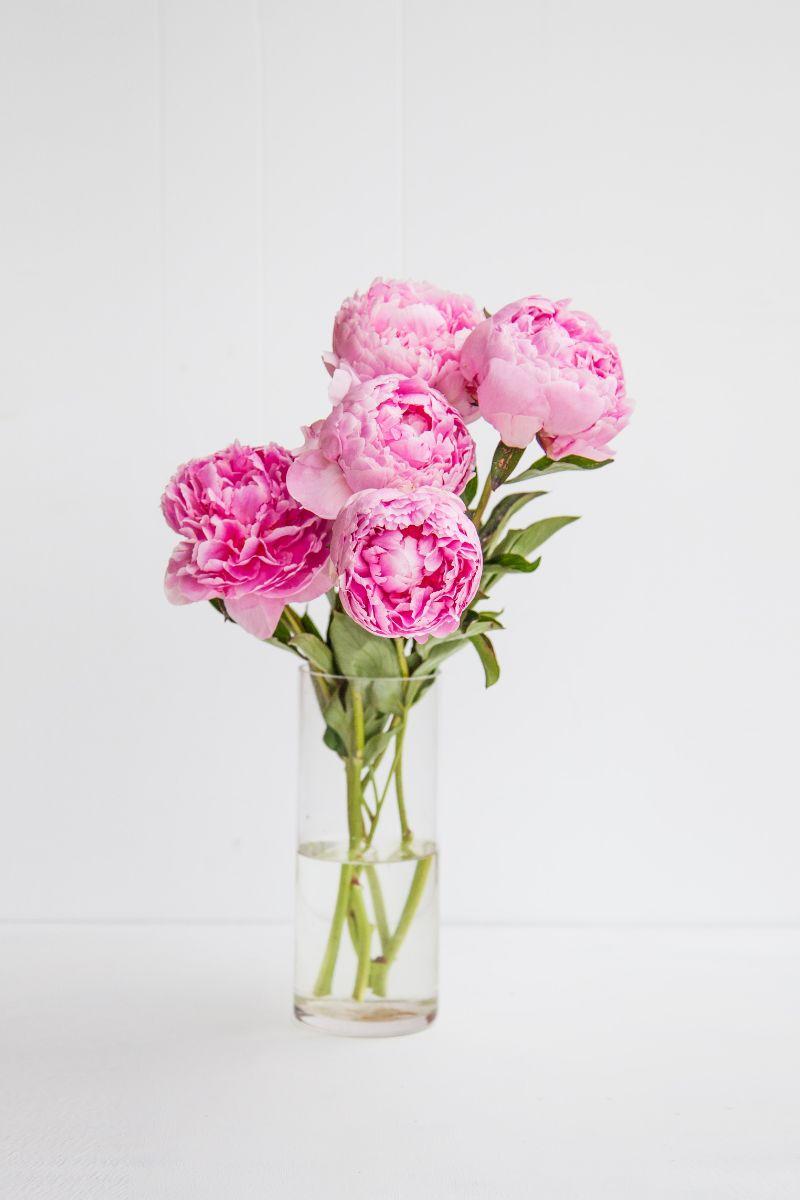 types of peonies pink in glass vase